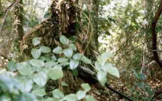 Экипировка снайпера: самое необходимое снаряжение