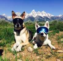Защитные очки для собаки