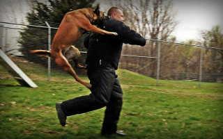 Нападение собаки — что делать? Часть 2